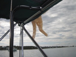 Nermal is starting to hang out on the very edge of the bimini.